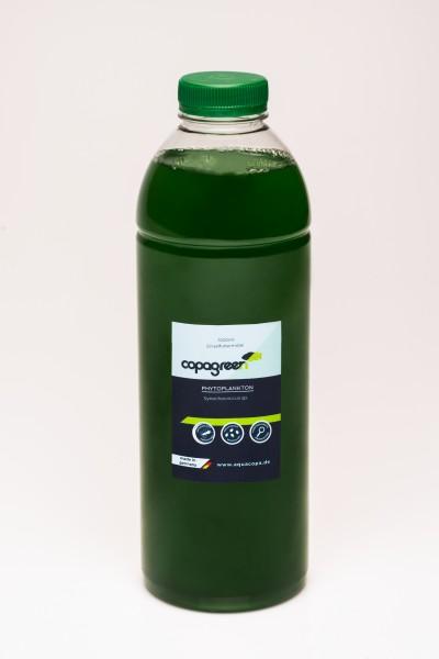 Phytoplankton Synechococcus sp. 5000 ml