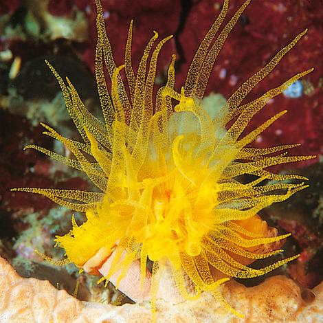 JBL KorallFluid 100 ml - Flüssignahrung mit Vitaminen für Korallen