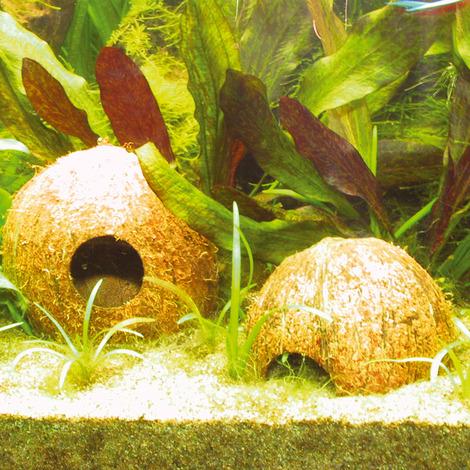 JBL Cocos Cava 3/4L - Kokosnuss-Schale als Höhle für Aquarien und Terrarien