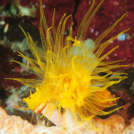 JBL KorallFluid 500 ml - Flüssignahrung mit Vitaminen für Korallen