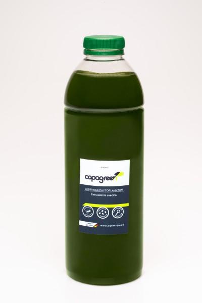 Phytoplankton Tetraselmis suecica 2 x 1000 ml