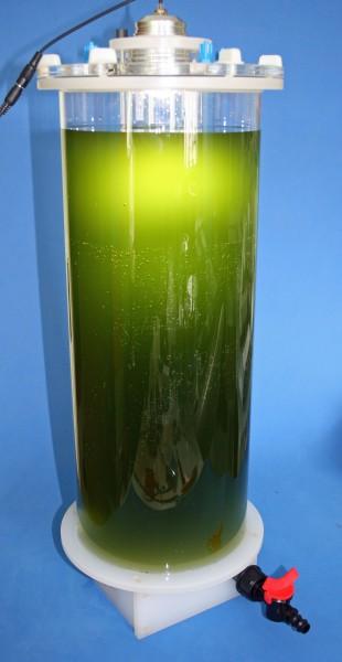 KnePo Planktonreaktor Luftbetrieben 14 Liter mit Leuchte und Magnetrührwerk