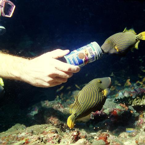 JBL MariPearls 1 l - Premium-Hauptfuttergranulat für Meerwasserfische