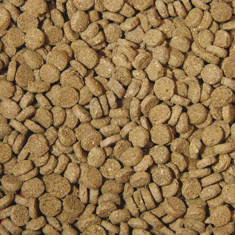 Hauptfutter-Chips für Krebse - 100 ml