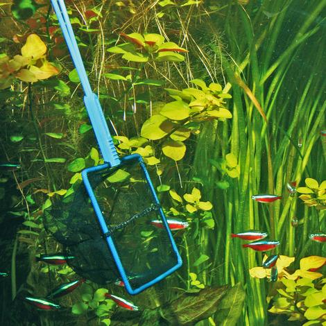 JBL Fangnetz 10 cm fein